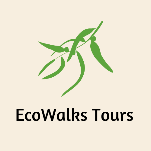 EcoWalk Tours