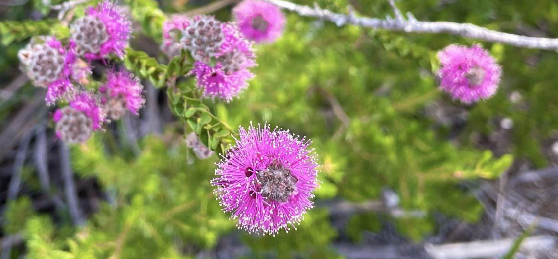 Native Flora of Sydney Harbour